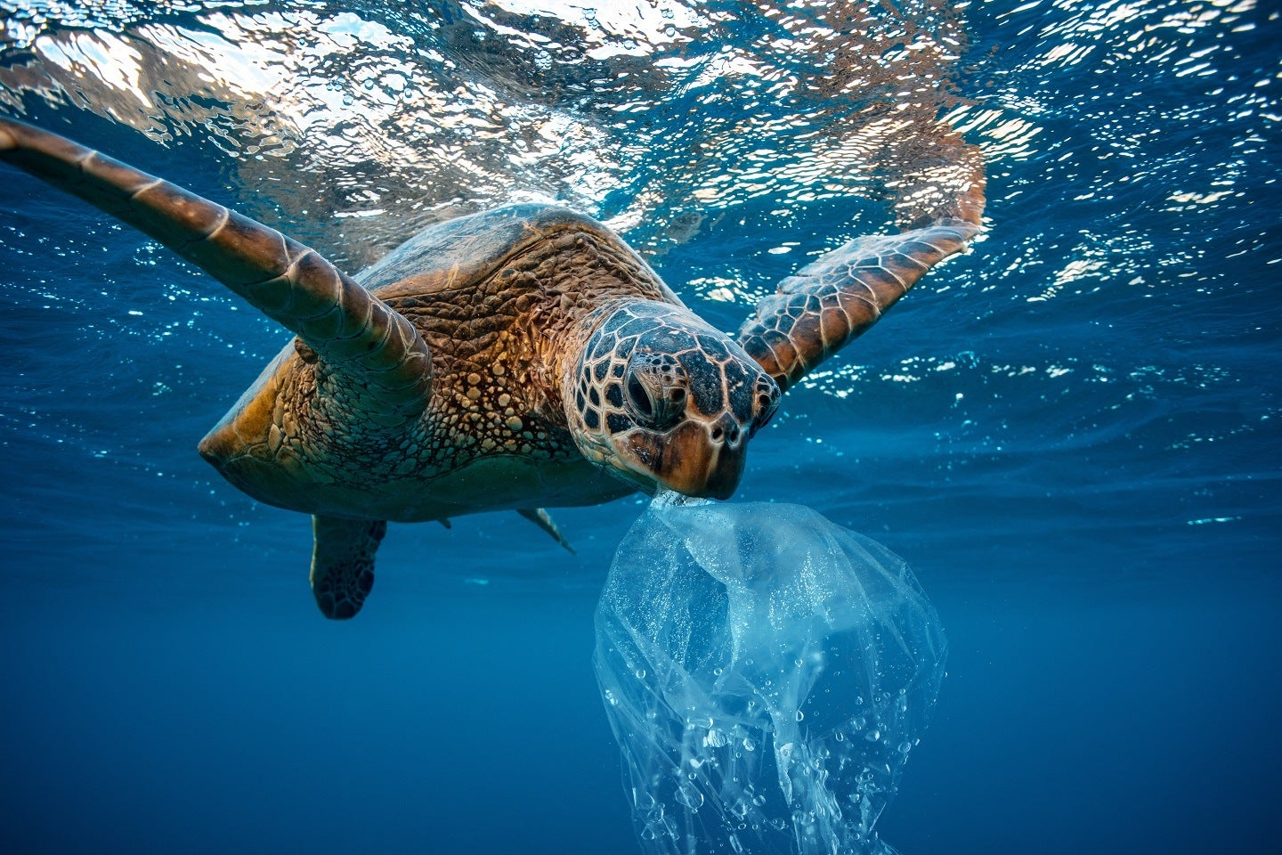 turtle in ocean with plastic bag