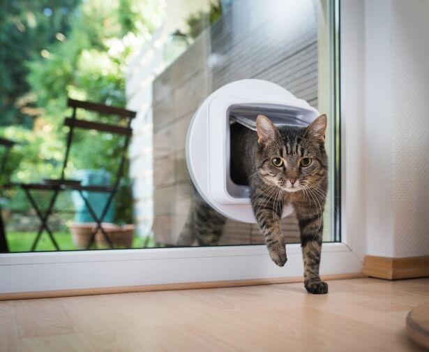 a cat enters a home through a catflap