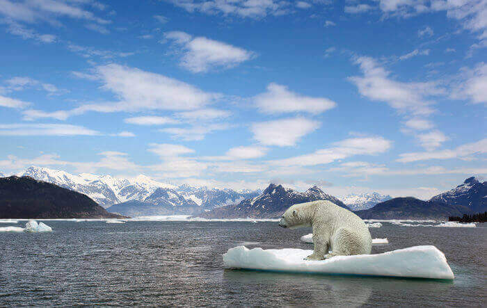 The Impact Of Global Warming On Animals And Plants