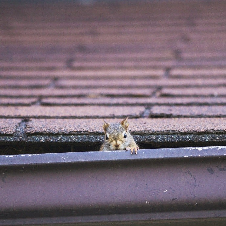 a squirrel on a rooftop