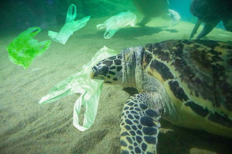 cutting down on plastic will be one of the prime environmental trends in 2020
