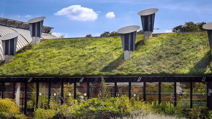 an extensive green roof with grass