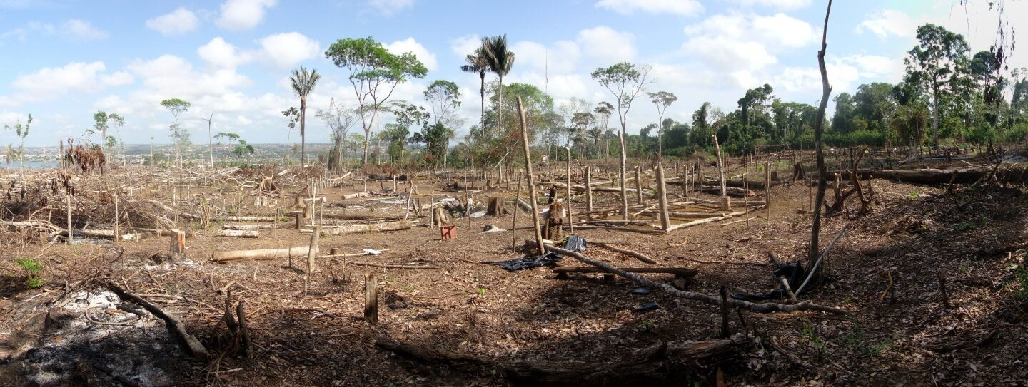 a destroyed portion of the Amazon rainforest