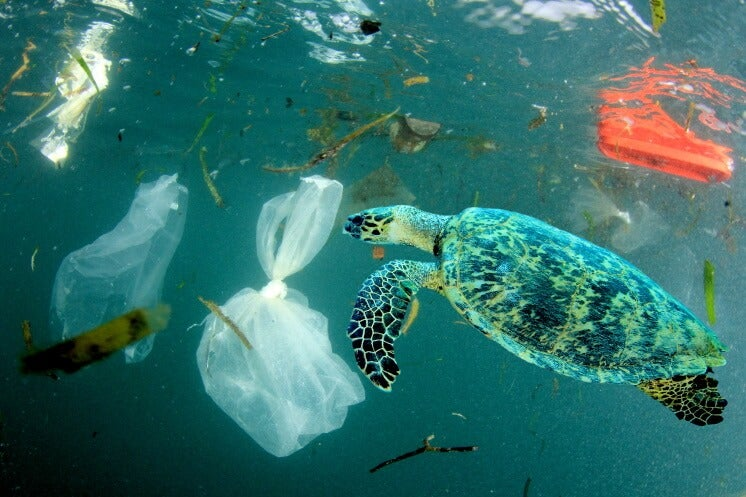 a turtle swimming with plastic bags
