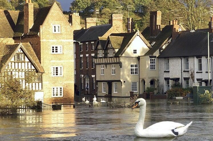 Swans in UK flood