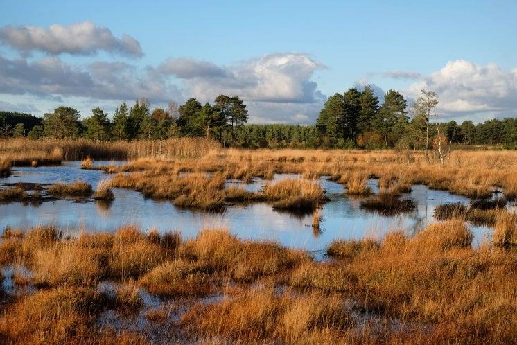 The wetlands of Thursley Common, Surrey