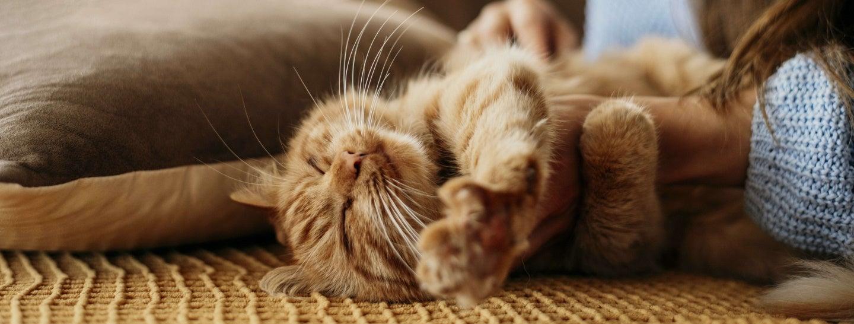 cat getting scratches