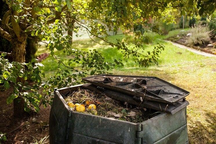 A compost bin in a sunny garden
