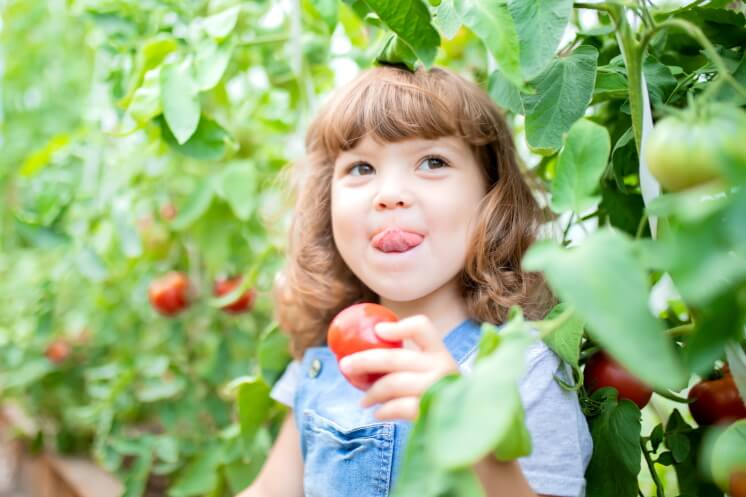 child eating a homegrown tomato in a garden