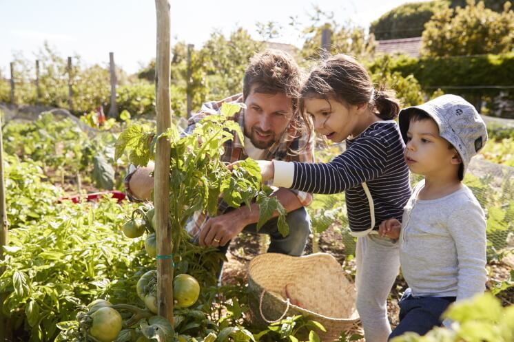 family grows food in an allotment