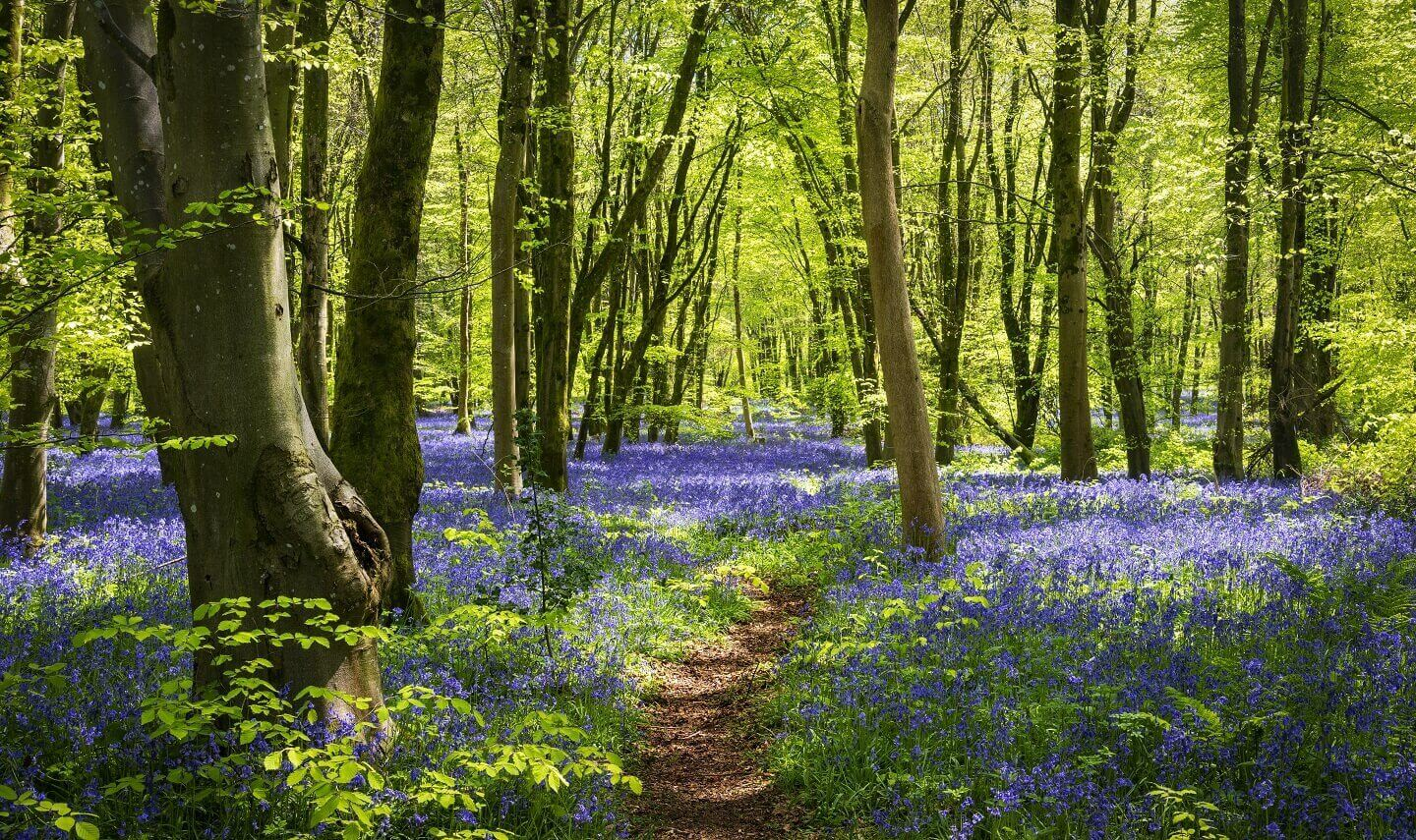 A view of trees in a UK woodland