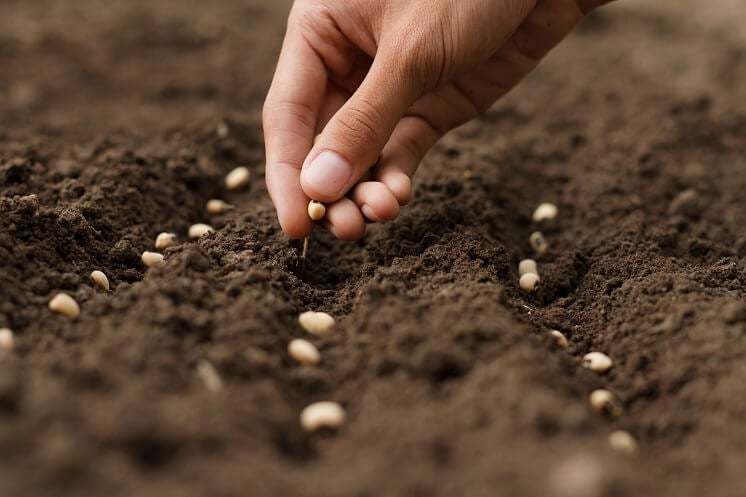 sowing seeds at home