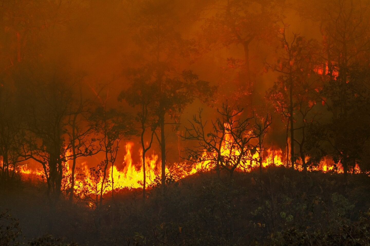 Wild fires in forest