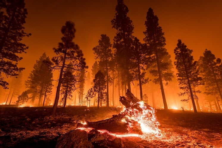 Wildfires trees