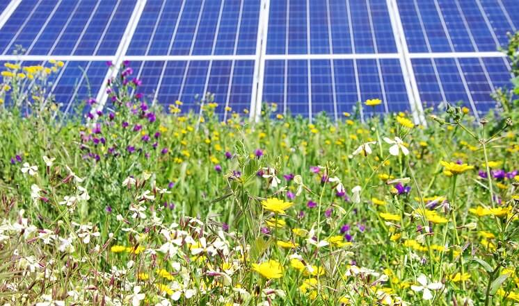 wildflowers with solar panels